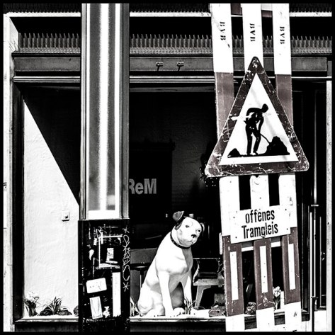 Basel-2007-Hund-im-Schaufen