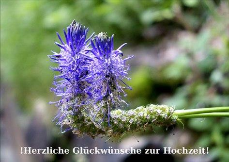 Piemont-2015-Glückwünsche-z