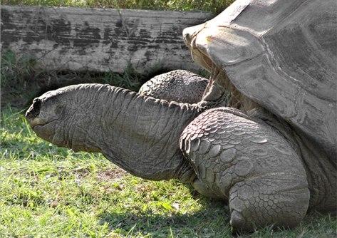 Prag-2015-Im-Zoo-01-Riesens