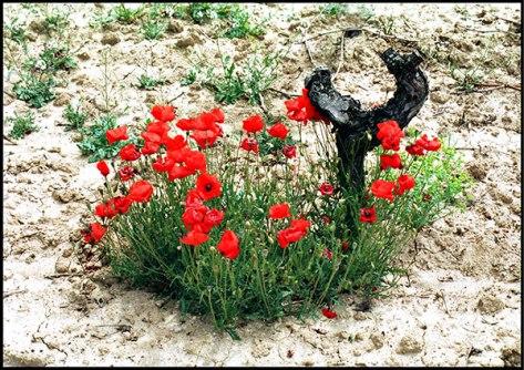 Valras-Plage-2004-Ohne-Tite