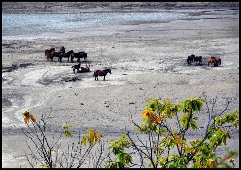 Ligurien-2017-Lago-di-Giacopiane-Pferde-am-See-01