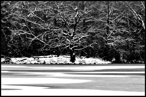 Stuttgart 2014 Verschneiter Baum am Bärensee 01 40x60